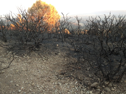photograph - Mount Diablo after the fire - September 2013