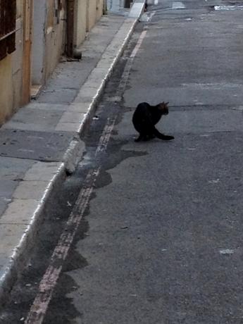 Black Cat, Vieux Port, Marseille, France 2014