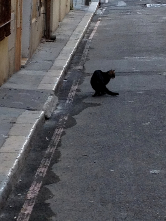 Black Cat, Vieux Port, Marseille, France 2014