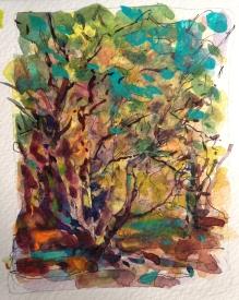 en plein air watercolor study of trees - June 2014