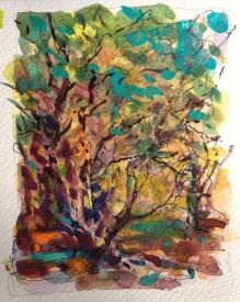 en plein air watercolor study of trees - June 2014
