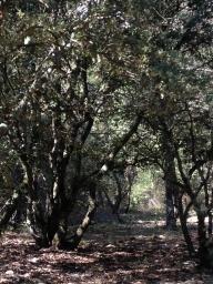 Klimt woods, Les Bassacs, France 2014
