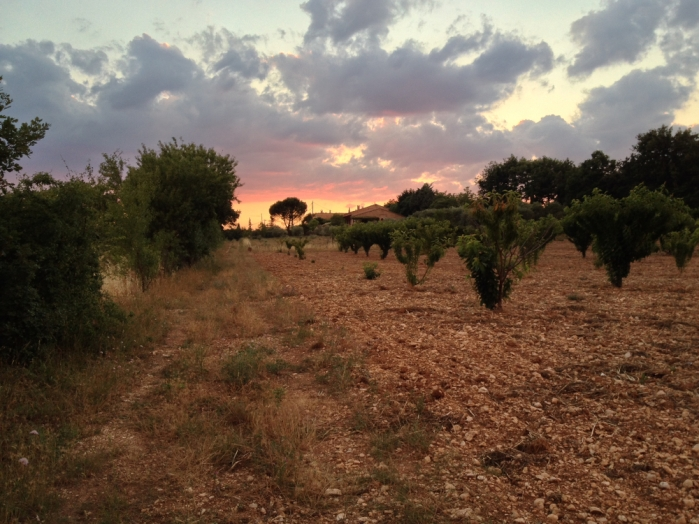 Evening sky over orchard, Les Bassacs, France 2014