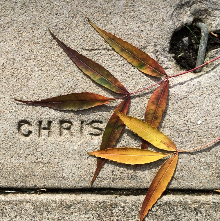 Chris - StreetArt, Mountain View, CA - Nov 2014
