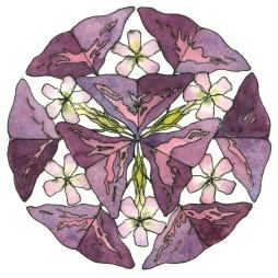 DPW16-CWM16-color-wheel-mandala-no-16-seashells-geometry-art-chris-carter-artist-022214-pencil