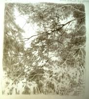 Light Through the Trees - pencil sketch 2010