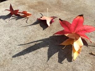 Sweetgum Leaves and Shadows - StreetArt, Mountain View, CA - Nov 2014
