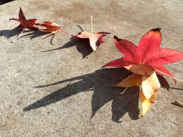 Sweetgum Leaves and Shadows - StreetArt, Mountain View, CA - Nov 2014