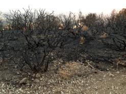 Mount Diablo after the fire