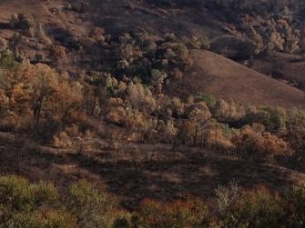 Mount Diablo muted landscape