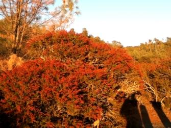 Evening light paints the landscape orange.