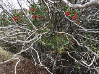 Napa Valley Trees, CA - November 2014