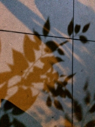 NYC Night Leaf Shadows photography chriscarterartist 09114 full