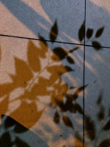 NYC Night Leaf Shadows photography chriscarterartist 09114 full