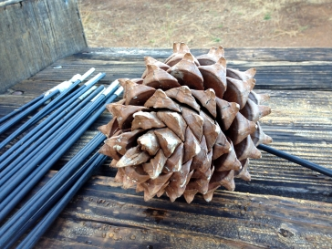 Conifer Cone and Tent Poles, Camping at Mount Diablo, CA