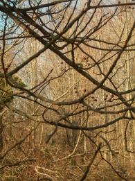 Trees - Walks with Dad, NJ - December 2011