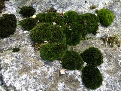 moss on rock photography walks without dad chris carter artist 2016-03-16 12.24.30 900