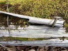 mossy log bound by iron photography walks without dad chris carter artist 2016-03-16 12.23.29 900
